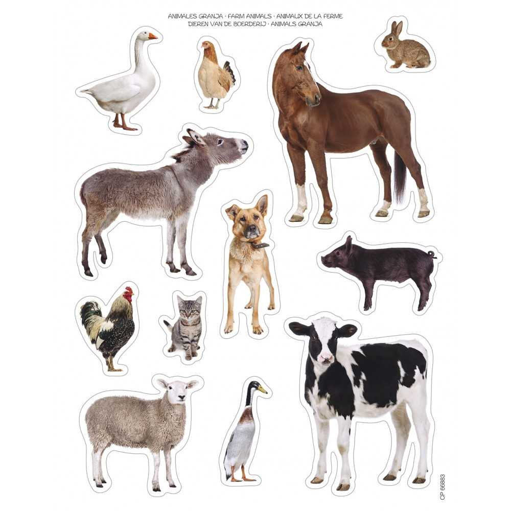 Bolsa Gomets Fotográficos Animales de...